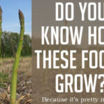 DOLCE LIFESTYLE: DO YOU KNOW HOW THESE 6 FOODS GROW?